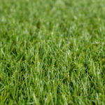 viper-25-artificial-grass-5